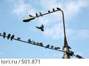 Купить «Голубиный слёт», фото № 501871, снято 5 октября 2008 г. (c) Игорь Веснинов / Фотобанк Лори