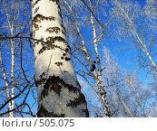 Зимний парк. Стоковое фото, фотограф Нина Галкина / Фотобанк Лори