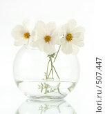 Купить «Белые цветы», фото № 507447, снято 21 февраля 2019 г. (c) Goruppa / Фотобанк Лори