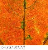 Купить «Фон из кленового листа», фото № 507771, снято 21 ноября 2018 г. (c) Ольга Завгородняя / Фотобанк Лори
