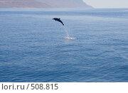 Купить «Дельфин, выпрыгнувший из воды», фото № 508815, снято 6 апреля 2008 г. (c) Владимир Чмелёв / Фотобанк Лори