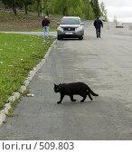 Чёрная кошка на пути (2008 год). Редакционное фото, фотограф Дмитрий Лемешко / Фотобанк Лори