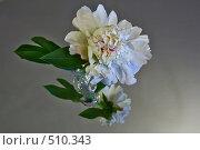 Цветок с отражением. Стоковое фото, фотограф Дмитрий Перельман / Фотобанк Лори