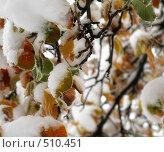 Осень в снегу. Стоковое фото, фотограф Михаил Лазаренко / Фотобанк Лори