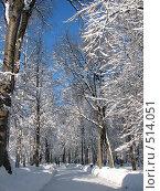 Купить «Зимний парк», фото № 514051, снято 17 февраля 2007 г. (c) Yevgeniy Zateychuk / Фотобанк Лори