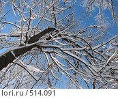 Купить «Заснеженные деревья на фоне неба», фото № 514091, снято 17 февраля 2007 г. (c) Yevgeniy Zateychuk / Фотобанк Лори