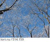 Купить «Заснеженные деревья на фоне неба», фото № 514159, снято 17 февраля 2007 г. (c) Yevgeniy Zateychuk / Фотобанк Лори
