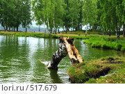 Купить «Сломанная береза на берегу водоема», фото № 517679, снято 19 августа 2008 г. (c) Стучалова Наталия / Фотобанк Лори