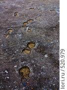 Купить «Застывшие следы», фото № 520979, снято 13 октября 2008 г. (c) Максим Солдатов / Фотобанк Лори