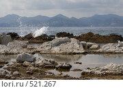 Купить «Морской прибой», фото № 521267, снято 21 сентября 2008 г. (c) Asja Sirova / Фотобанк Лори