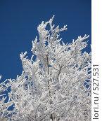 Пушистый белый иней на ветках. Стоковое фото, фотограф Ирина Таболина / Фотобанк Лори