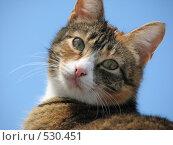 Кошка. Стоковое фото, фотограф Алексей Падерин / Фотобанк Лори