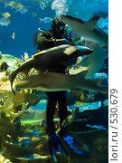 Дайвер с акулами. Стоковое фото, фотограф Алексей Крылов / Фотобанк Лори
