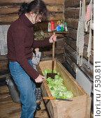 Купить «Рубка капусты на зиму», фото № 530811, снято 26 октября 2008 г. (c) Денис Шароватов / Фотобанк Лори