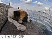Купить «Пес лежит на набережной Невы на фоне парусника», фото № 531099, снято 17 июня 2008 г. (c) Сергей Юрченко / Фотобанк Лори