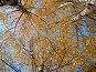 Берёзовая осень, фото № 532511, снято 26 октября 2008 г. (c) Карелин Д.А. / Фотобанк Лори