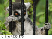 Заключенный. Стоковое фото, фотограф Сергей Ляшко / Фотобанк Лори