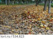 Золотая осень. Стоковое фото, фотограф Аврам / Фотобанк Лори