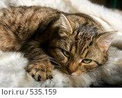 Купить «Кот в тоске», фото № 535159, снято 1 декабря 2007 г. (c) Садыхова Леся / Фотобанк Лори