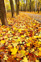 Осенний парк, фото № 537519, снято 26 апреля 2017 г. (c) Роман Сигаев / Фотобанк Лори