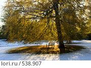 Купить «Скамейка под осенним деревом», фото № 538907, снято 29 октября 2008 г. (c) Максим Горпенюк / Фотобанк Лори