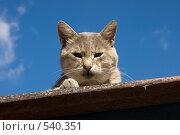 Морда кота крупным планом на фоне неба. Стоковое фото, фотограф Шахов Андрей / Фотобанк Лори