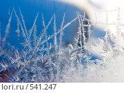 Купить «Зимний узор», фото № 541247, снято 6 февраля 2005 г. (c) Кравецкий Геннадий / Фотобанк Лори