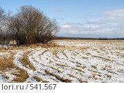 Купить «Первый снег на поле», фото № 541567, снято 23 октября 2008 г. (c) Анатолий Никитин / Фотобанк Лори
