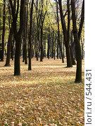 Купить «Осень», фото № 544431, снято 9 октября 2008 г. (c) Андрюхина Анастасия / Фотобанк Лори