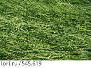 Купить «Трава после ливня», фото № 545619, снято 19 июня 2008 г. (c) Ханыкова Людмила / Фотобанк Лори