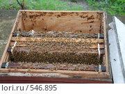 Пчелы. Стоковое фото, фотограф E. O. / Фотобанк Лори