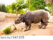 Купить «Носорог», фото № 547079, снято 21 августа 2008 г. (c) Виталий Романович / Фотобанк Лори