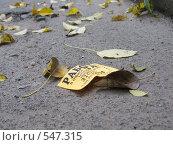 Купить «Осень», фото № 547315, снято 4 ноября 2008 г. (c) Олеся Сарычева / Фотобанк Лори