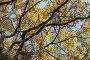 Осенняя листва дуба на фоне голубого неба, фото № 548175, снято 12 октября 2008 г. (c) Георгий Марков / Фотобанк Лори