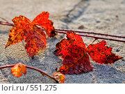Красные осенние листья ежевики. Стоковое фото, фотограф Евгений Жминько / Фотобанк Лори