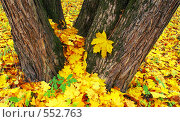 Купить «Золотая осень», фото № 552763, снято 11 октября 2008 г. (c) Анатолий Теребенин / Фотобанк Лори