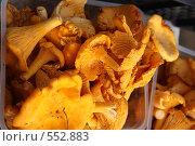 Купить «Грибы лисички», фото № 552883, снято 21 сентября 2008 г. (c) Ольга Лерх Olga Lerkh / Фотобанк Лори