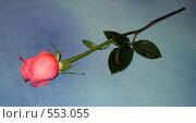 Роза. Стоковое фото, фотограф Наталья Ничепорук / Фотобанк Лори
