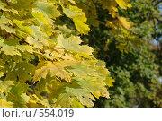 Кленовые листья. Стоковое фото, фотограф Власов Виктор Валентинович / Фотобанк Лори