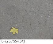 Купить «Отпечаток кленового листа на асфальте», фото № 554343, снято 4 октября 2008 г. (c) Огульчанский Александер / Фотобанк Лори