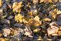 Опавшая листва, фото № 554799, снято 8 ноября 2008 г. (c) Сергей Лаврентьев / Фотобанк Лори