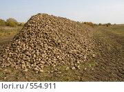Купить «Урожай сахарной свеклы», фото № 554911, снято 4 октября 2008 г. (c) Андрей Короткевич / Фотобанк Лори