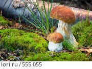 Вкусная парочка, фото № 555055, снято 4 августа 2008 г. (c) Ольга Киселева / Фотобанк Лори