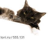 Ч/б кот на отдыхе. Стоковое фото, фотограф Aneta Vaitkiene / Фотобанк Лори