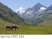 Купить «Лошади на фоне вершины Пирамида, Карачаево-Черкесия», фото № 557123, снято 9 августа 2008 г. (c) Vladimir Fedoroff / Фотобанк Лори