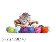 Купить «Котенок в корзинке с цветными клубками», фото № 558143, снято 20 сентября 2008 г. (c) Cветлана Гладкова / Фотобанк Лори