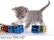 Купить «Котенок играет», фото № 558147, снято 20 сентября 2008 г. (c) Cветлана Гладкова / Фотобанк Лори
