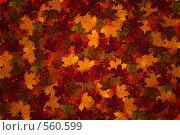 Осенние листья. Стоковая иллюстрация, иллюстратор Наталья Ефимова / Фотобанк Лори