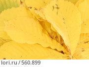 Сухие желтые листья. Стоковое фото, фотограф Вячеслав Москалев / Фотобанк Лори