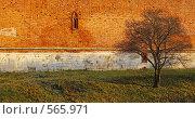 Купить «Осень древних стен», фото № 565971, снято 13 ноября 2008 г. (c) Анатолий Теребенин / Фотобанк Лори